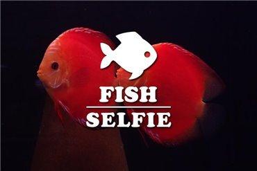 Discus fish (WYSIWYG)