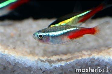 Süsswasserfische