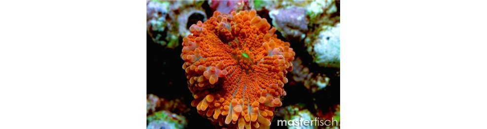 Soft corals and others
